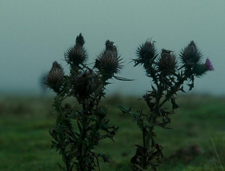 Wuthering.Heights.2011.720p.BluRay.X264-AMIABLE 02429